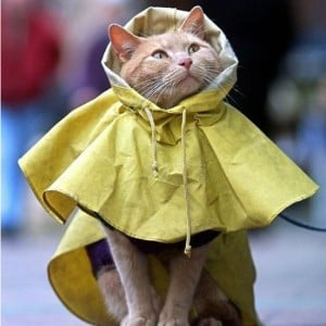 Image result for cats predicting the weather