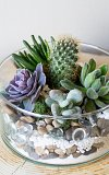 Terrarium Workshop + Wine - Oct 24